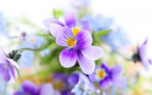 поздравления с 8 марта, первые цветы,чего хочет женщина от мужчины