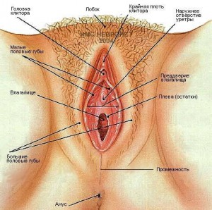 эрогенные зоны женщины клитор, стимуляция клитора, G точка