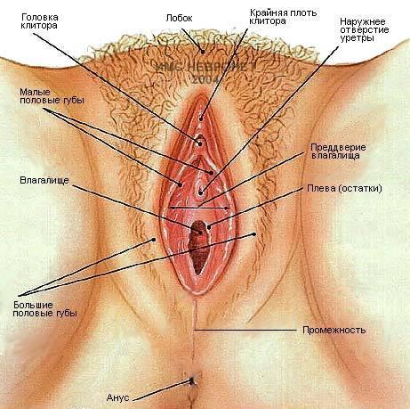 Эрогенные зоны у женщин секс